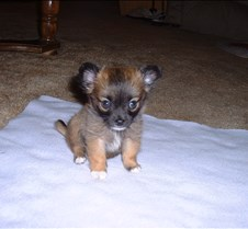 Puppy Picts 066