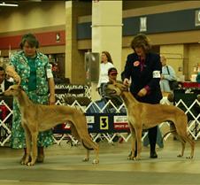 Winners_12-18_Dogs_2962CCr