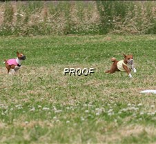 Basenjis_8July_BOB_Runoff__5440CR