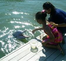 Dorie feeding dolphin