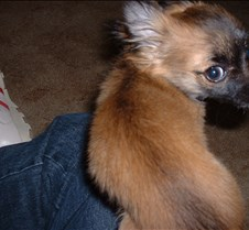 puppy picts 9-21-03 004