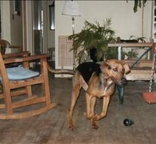 2003 3-15 Jack after bath 2