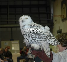 Other owl