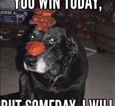 dog revenge