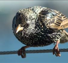 BIRDS birds