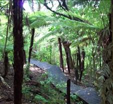 Bush Track NZ