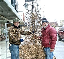 decorating downtown trees