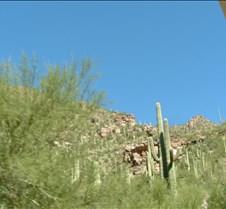 Tucson Sabino Canyon 10