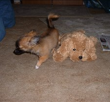 puppy picts 9-21-03 007