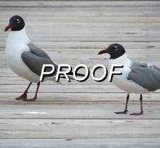 Seagulls_dock
