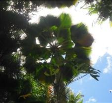 Hawaii 2010 179