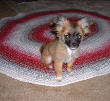 puppy picts 9-21-03 025