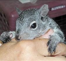 073102 Squirrel Juvenile 05