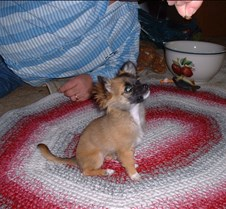 puppy picts 9-21-03 031