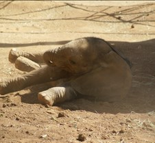 Wild Animal Park 03-09 085