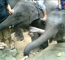 186 two little elephants