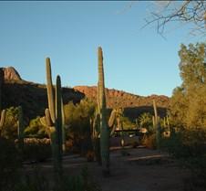 Tucson Lazy K