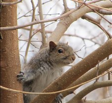 IMG_0032squirrel