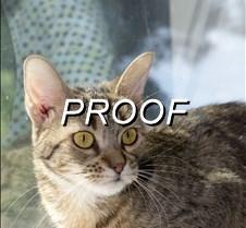 081313_Pet(Cat)
