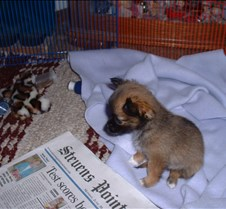 Puppy Picts 003