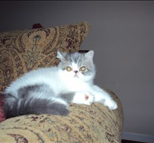 King Louis Krissy's kitty