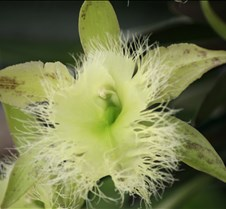 Big Island Orchid Varieties 4