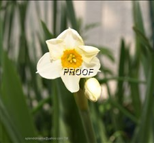 Photo taken on 03132020 @ 1536 - bicolor