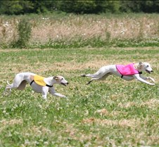 Whippets_8July_Run2_Course7_5096CR