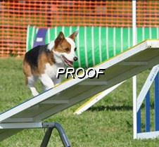 May 25, 2009 AKC Agility Trial