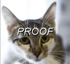 07-28-14_pow_cat