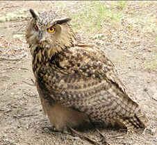 062802 OWL 40