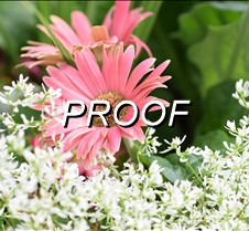 Flower 14
