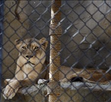 J Zoo 0611_123