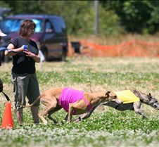Greyhounds_7_July_Run1_Course2_3848CR