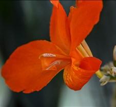 -Orange Punch-