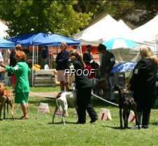 Winners_Coursing_Dogs_4141