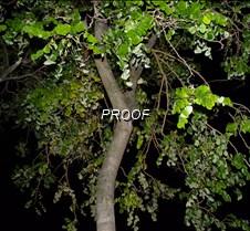 Night Tree Leafs