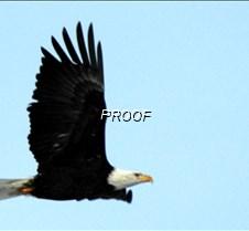 eagleflight-3