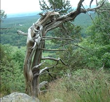 Mountain monster tree 1