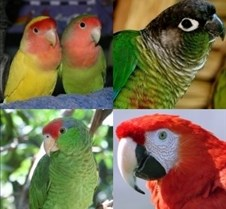 types of parrots