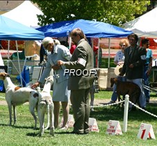 Winners_Veterans_Dog_Class_4158