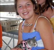 Cat kitten girl 2