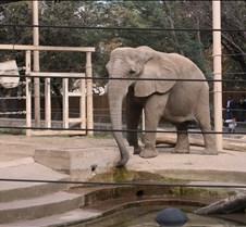 J Zoo 0611_111
