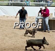 042213_hog-dog-01