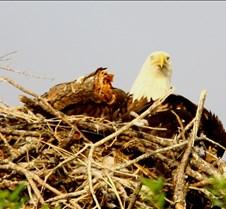 Eagle's Nest in Punta Gorda 2