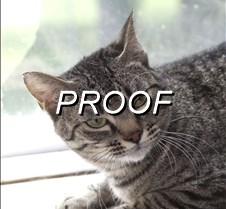 070213_POW-cat