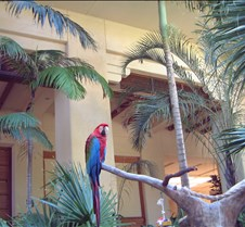 Hyatt Parrot Kauai