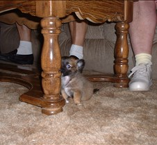 Puppy Picts 040