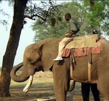 Elephant Ride0005