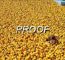 082513_ducks_01